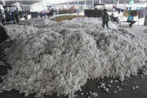 Pak May Resume Import Of Cotton From India
