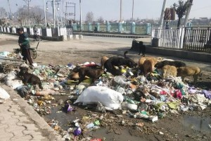 Srinagar Going Green, But How Clean is the City?