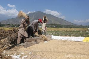 Survey Shows Economic Crisis Among J&K Farmers