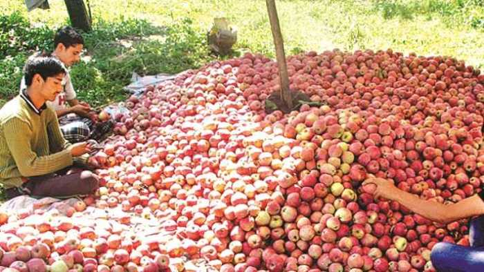 Rates for Kashmiri apple shoot up to almost double of last year's