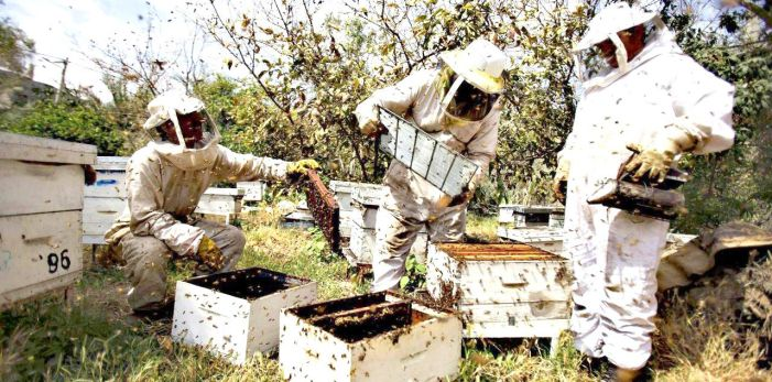 Beekeeping Offers the Potential of Robust Rural Development in J&K
