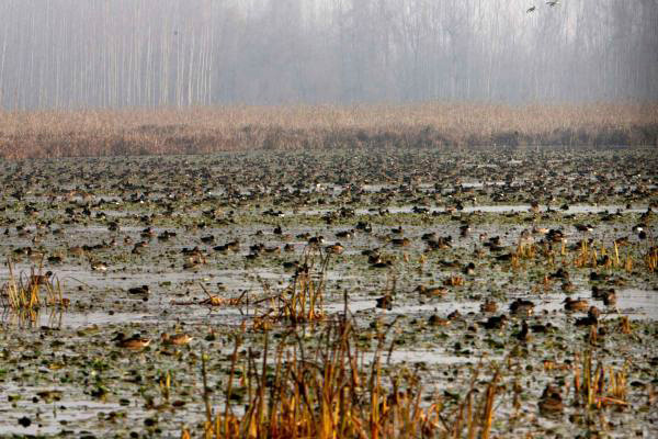 Div Com stresses on timely demarcation of all wetlands