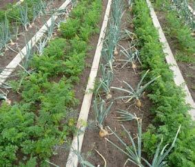 Srinagar residents asked to start kitchen garden for essentials