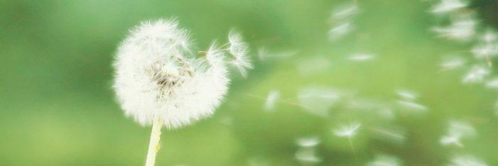 Doctors panel issues advisory for pollen allergy