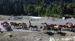 Nomads along with their flock on way to mountains in Sonamarg