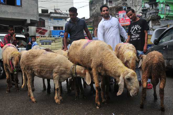Govt fixes rates of sacrificial livestock in Kashmir ahead of Eid-ul-Adha