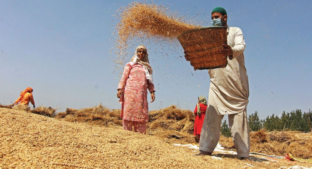 A farmer separates chaff from rice seeds in the traditional method of winnowing in south Kashmir