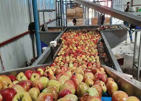 Cold storage business down by 40% this year in Kashmir