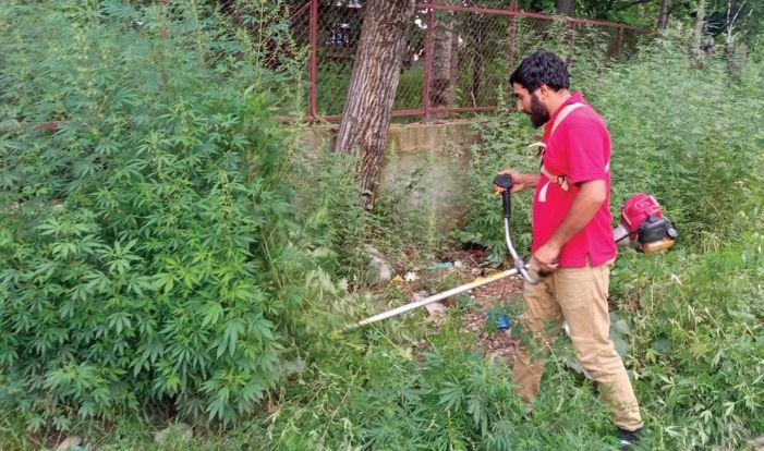 The Cannabis Cutter