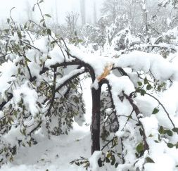 Govt declares untimely November snowfall as 'Special Natural Calamity'
