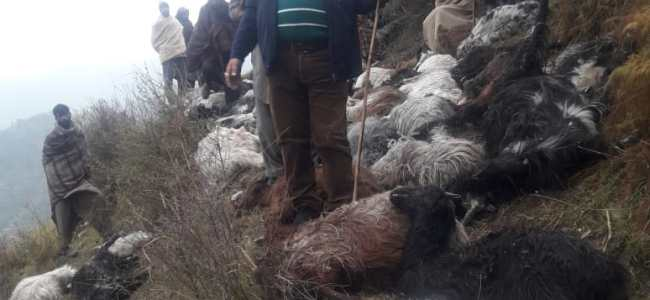 More than 100 sheeps, goats killed due to lightening in Rajouri, teams deputed to asses loss