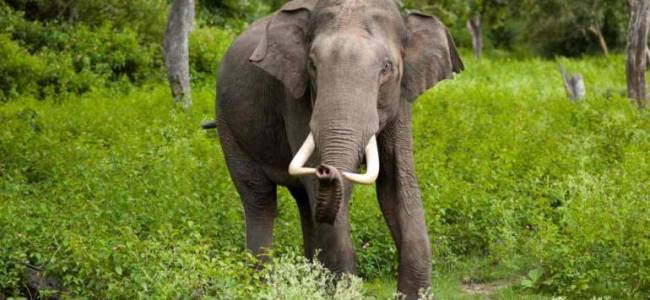 'Illegal and not permissible': India's only elephant rescue centre gets notice