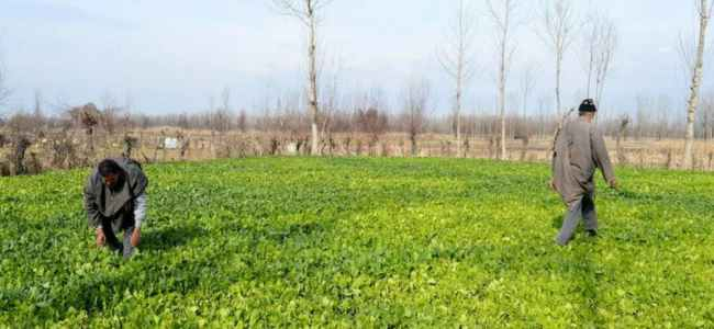 Int'l expert imparts training to farmers, officials on HD fruit plantation