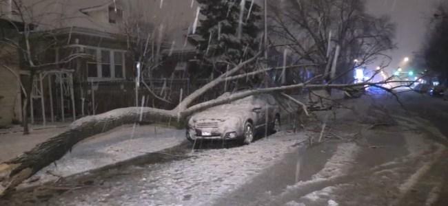 US winter storms kill seven: Media