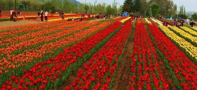 Tulip festival to begin today: Advisor Baseer Khan reviews final arrangements