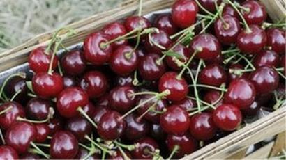 Mechanism worked out for transportation of Cherry, other fruit: Govt