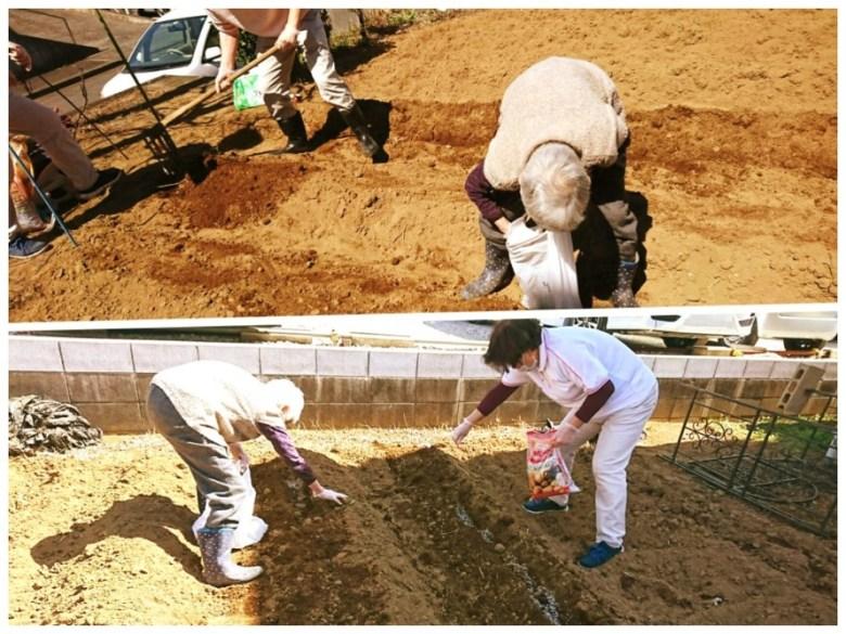 今年もぬくもりの畑にじゃがいも植えました