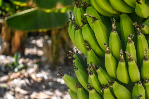 Can Consuming Banana Peels Assist You Lose Weight?
