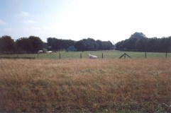 Cows are pastured opposite views of the park.