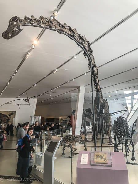 long neck dinosaur skeleton
