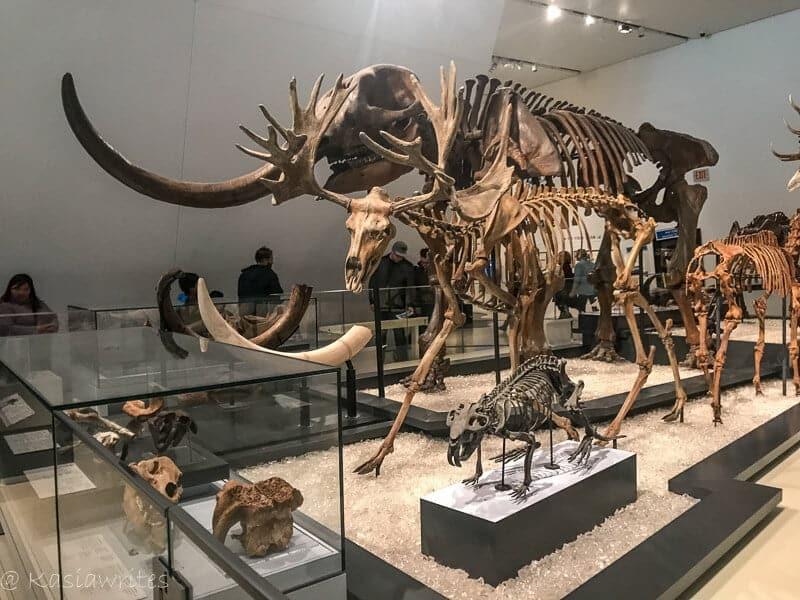 animal skeleton with long husks