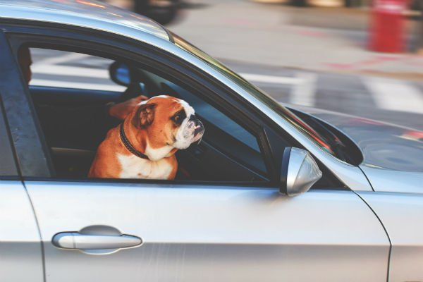 future of travel: road trip wth dogs