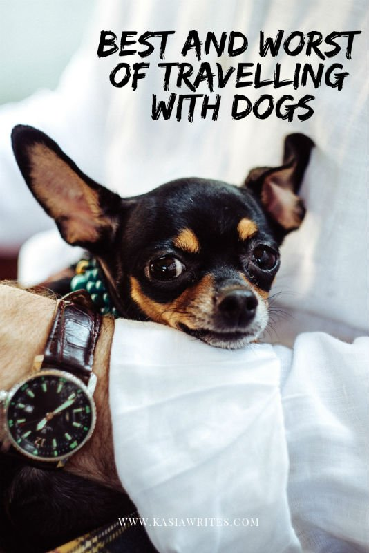 Best and worst of travelling with dogs | kasiawrites