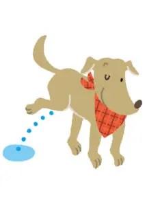 床をほじくる、剥がす!フローリングに影響のあるアンモニアにも要注意!犬と生活するフローリングリフォーム