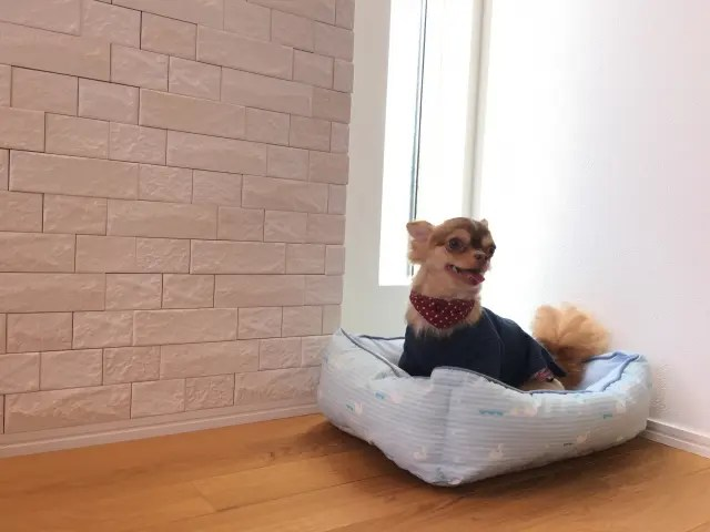 ペットの犬にフローリングがダメな3つの理由