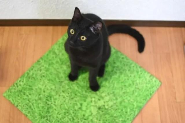 フローリングや畳などの床の対策