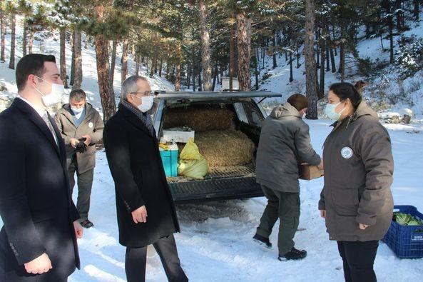 Tosya'da yaban hayvanları için doğaya yem bırakıldı