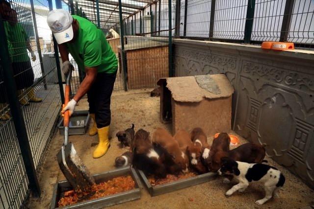 Geçici Hayvan Bakımevinde bin 819 köpek ve bin 213 kediye bakıldı