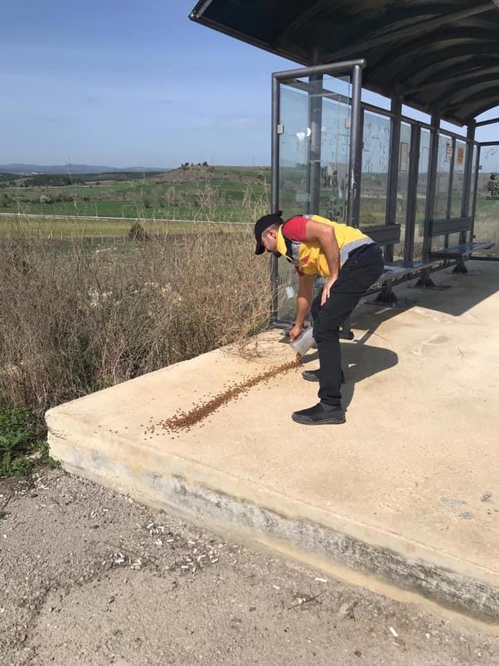 Kastamonu Belediyesi, sokak hayvanları ile kuşları besledi