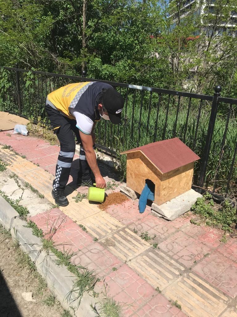 Kastamonu Belediyesi tam kapanma sürecinde sokak havanlarını unutmadı
