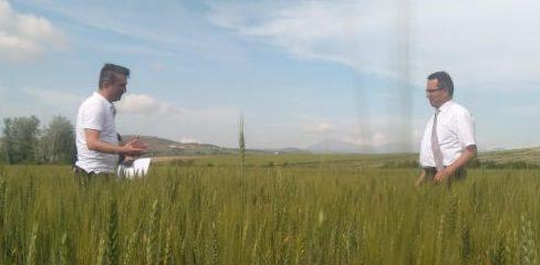 Arpa ve Buğday Tohumluk Üretim Parselleri Kontrol Edildi
