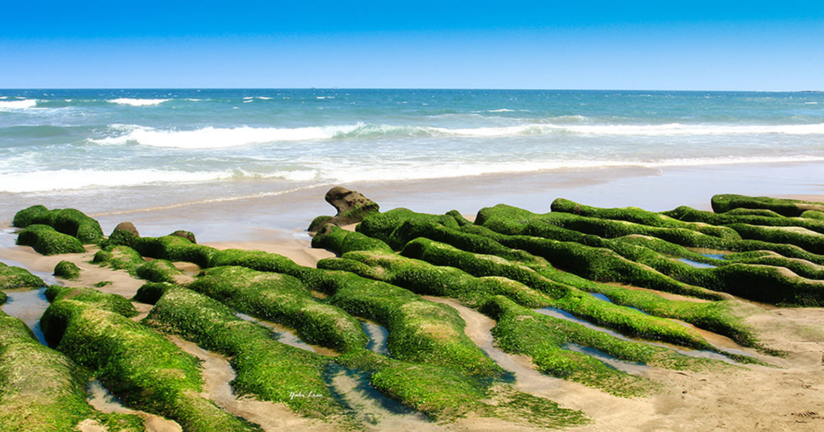 週末好去處   春天的新綠 老梅-綠石槽