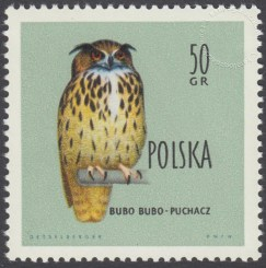 Ptaki chronione w Polsce - 106