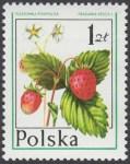 Owoce leśne - 2342