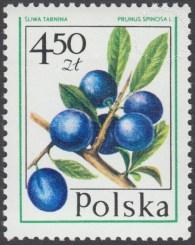 Owoce leśne - 2345