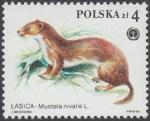 Chronione zwierzęta futerkowe - 2798