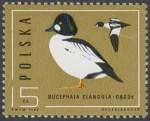 Ptaki - dzikie kaczki - 2853