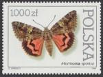 Motyle z kolekcji Instytutu Zoologii PAN w Warszawie - 3196