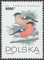Ptaki ogrodów - 3315