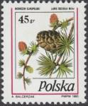 Owoce drzew iglastych - 3382