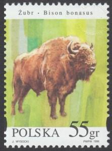 Zwierzęta pod ochroną - żubry - 3484