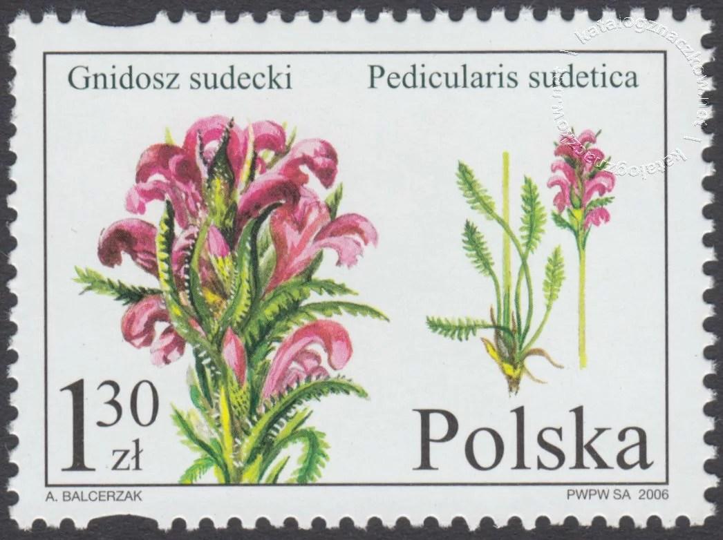 Chronione i zagrożone gatunki flory polskiej znaczek nr 4082