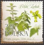 Polski Zielnik - 5085