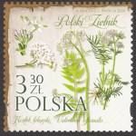 Polski Zielnik - 5087