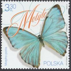 Motyle - 5092