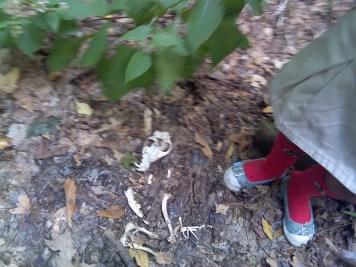 Ezt találtuk az erdőben.